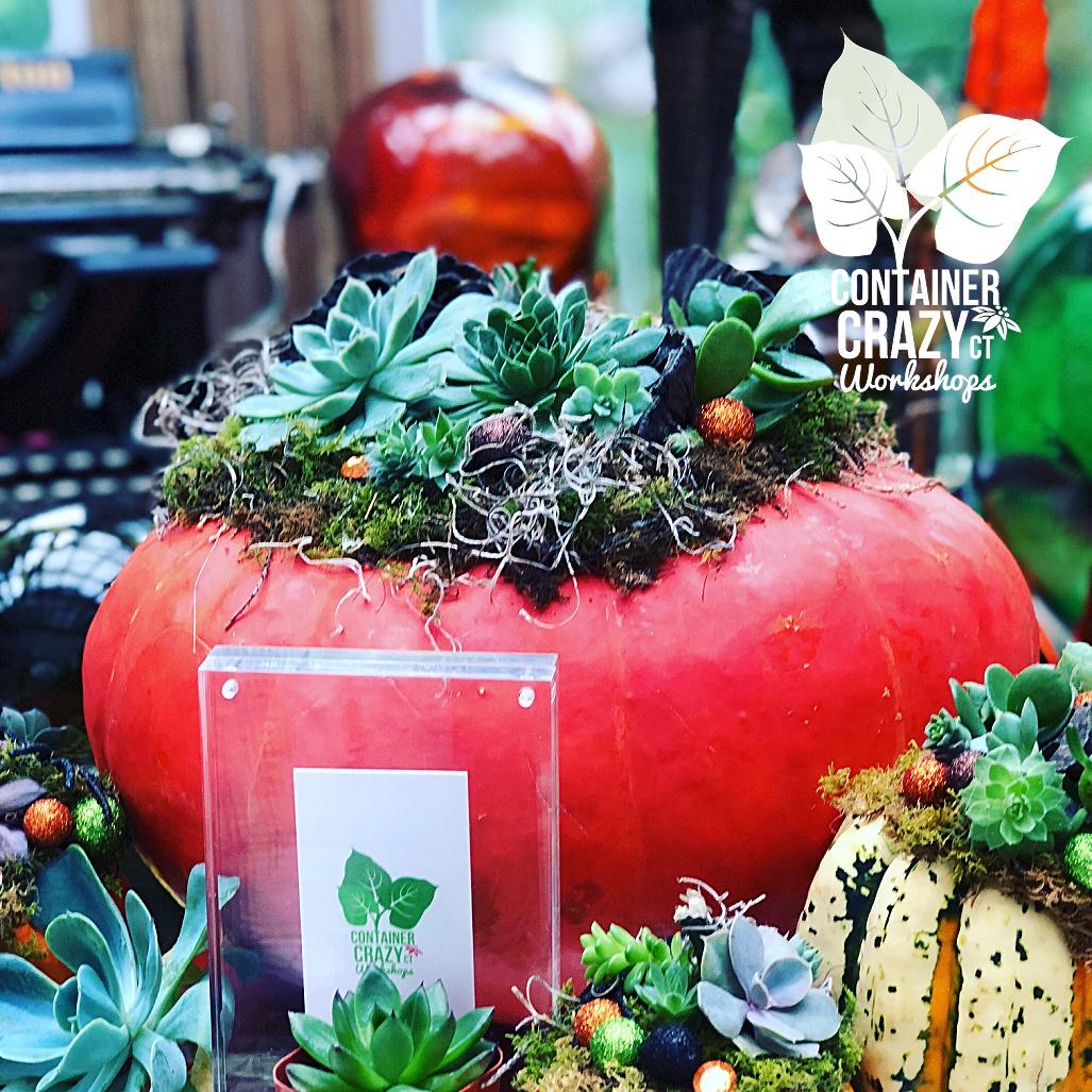 succulent pumpkins home_0004
