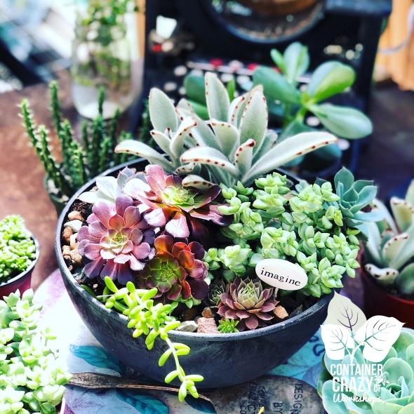 A Succulents 2019 C Testa Copywrite_0010