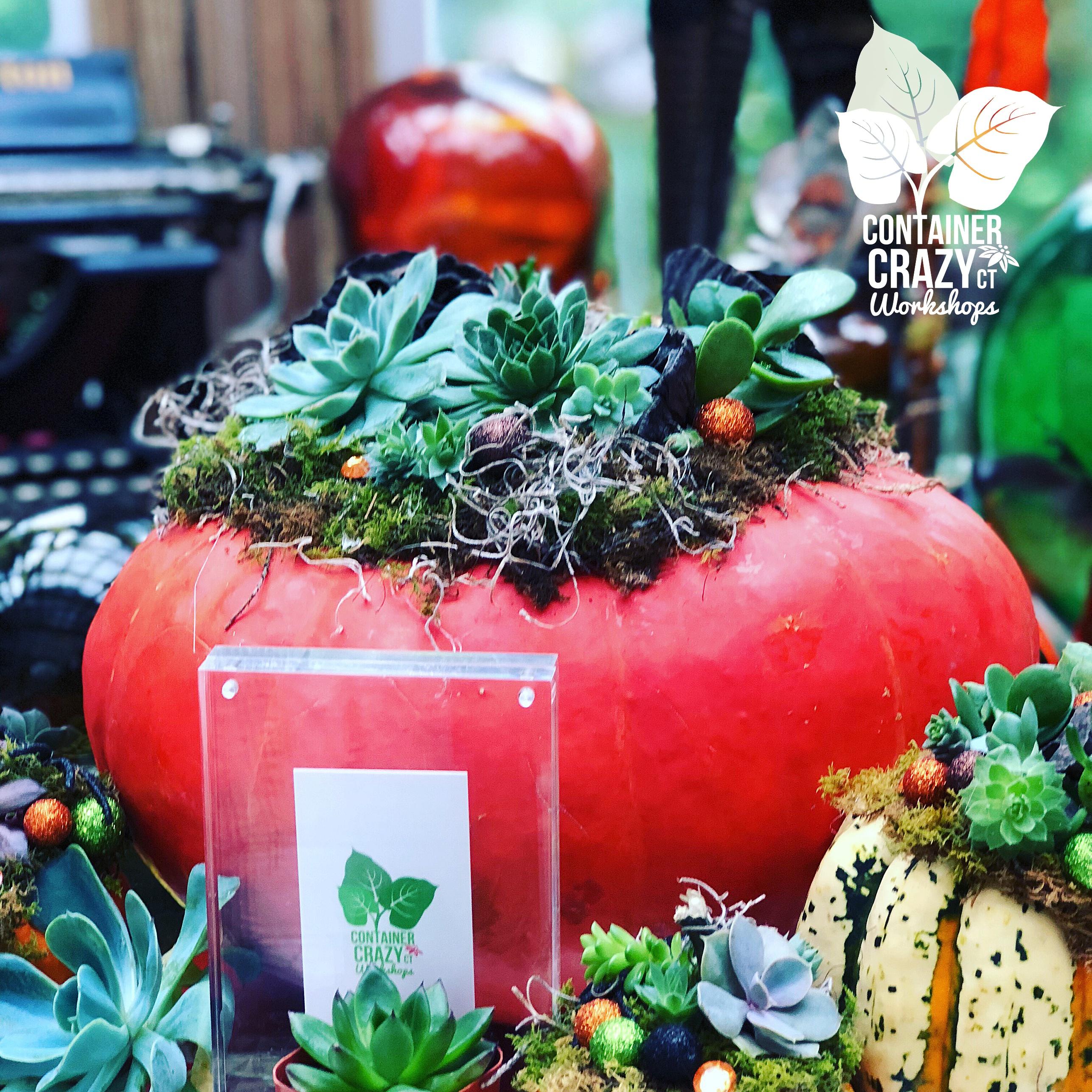 A Succulents Pumpkin C Testa Copywrite_0002