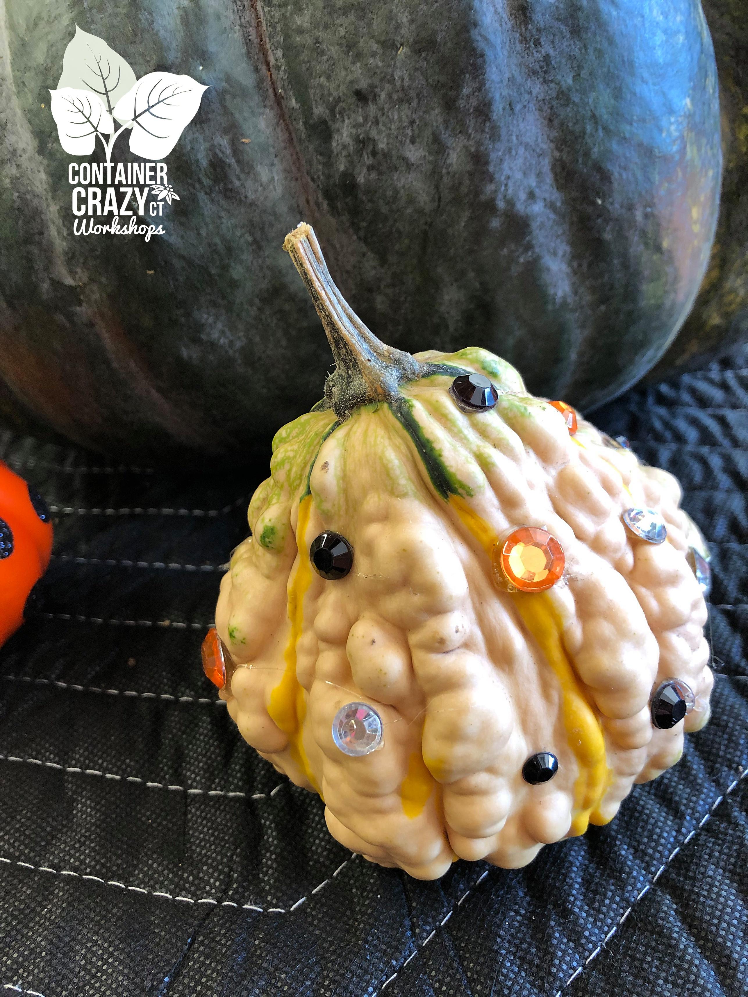 Succ Pumpkin Workshops by C Testa Copywrite_0002