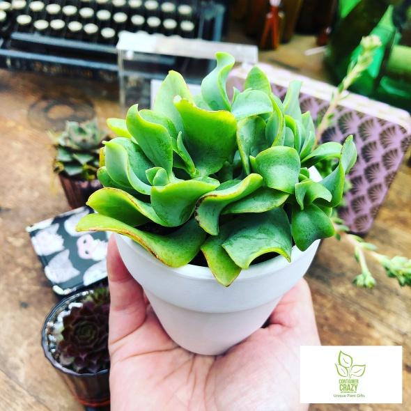 Purse and Plants C Testa Copywrite_0018