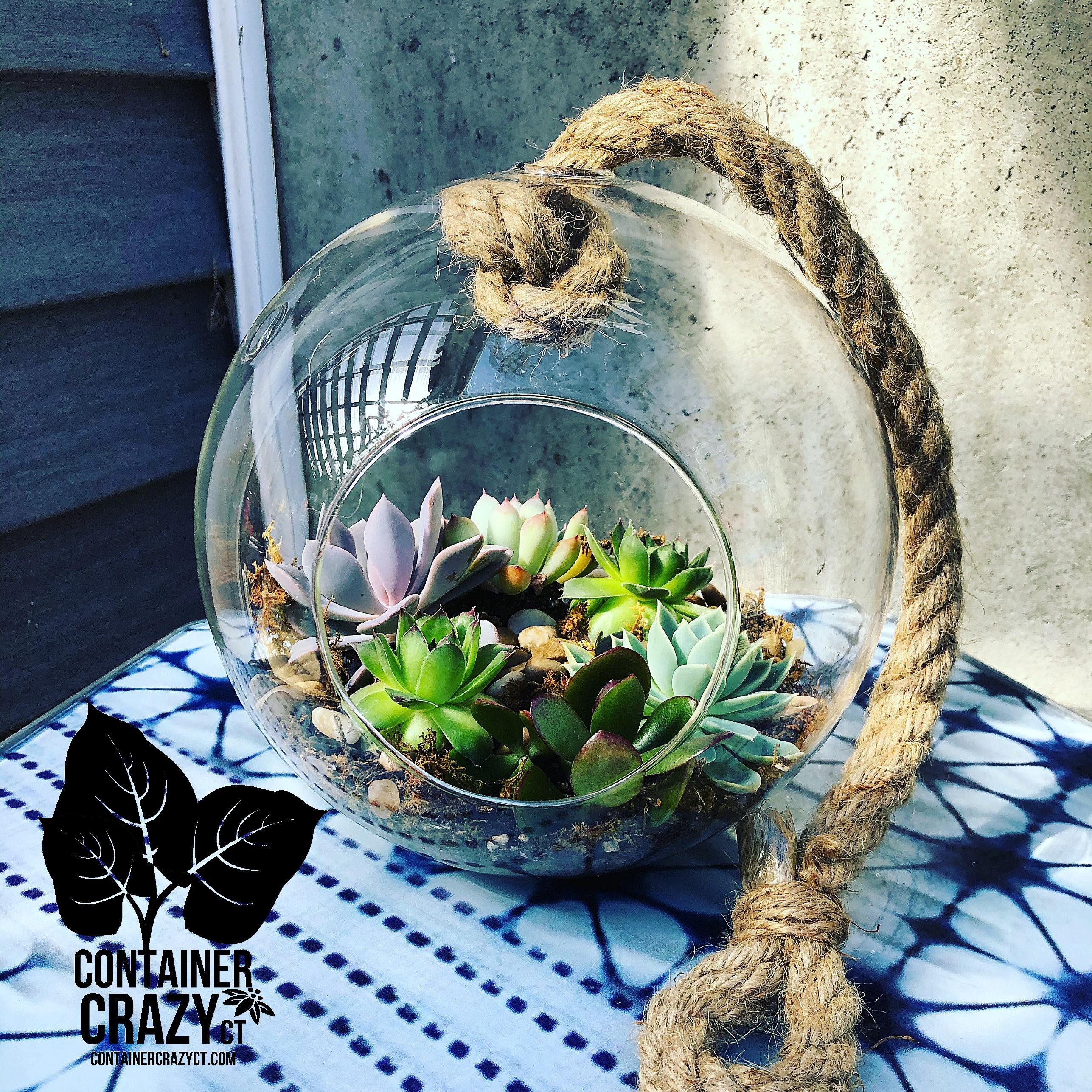 Watering Succulents 2020 C Testa Copywrite_0002