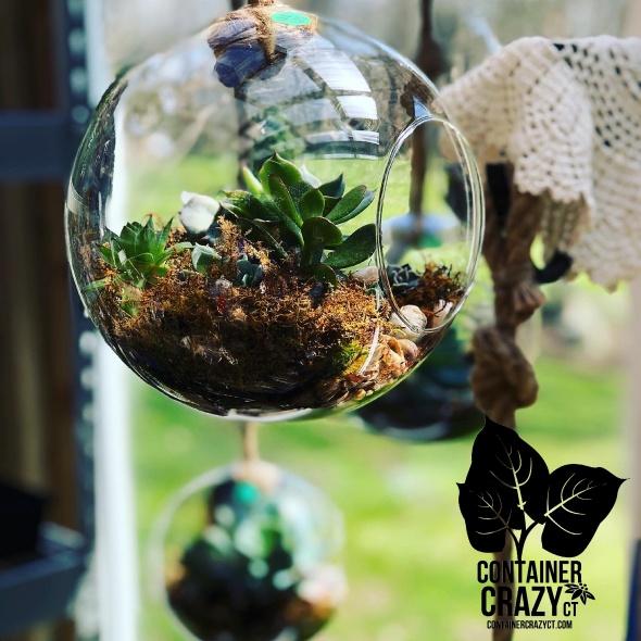 Watering Succulents 2020 C Testa Copywrite_0004